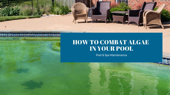 How To Combat Algae In Your Pool - Splash Pool & Spa Cedar Rapids
